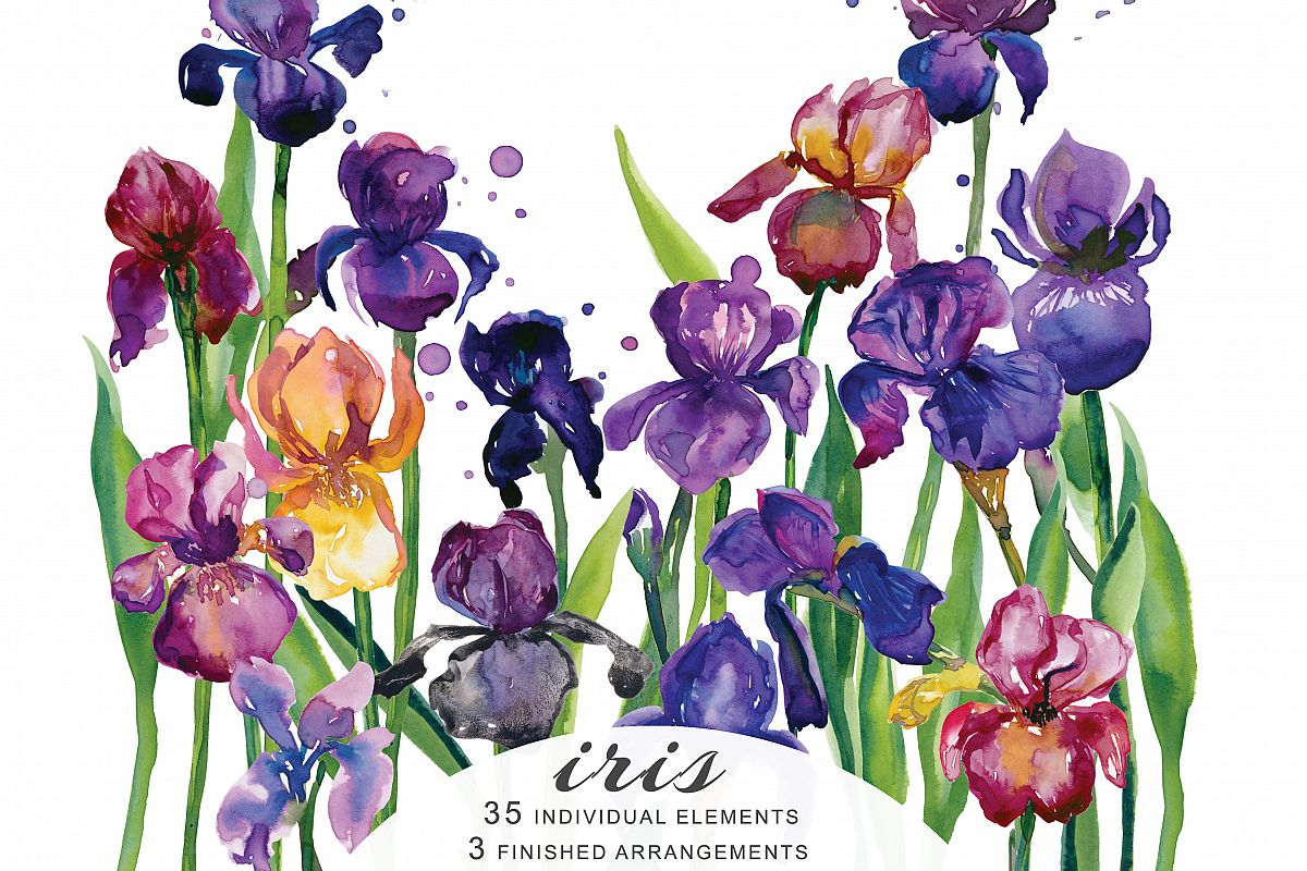Hand Painted Watercolor Iris Flower Clipart