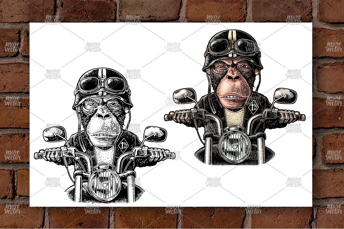 Monkey driving a motorcycle rides. Vector vintage engraving example image 1