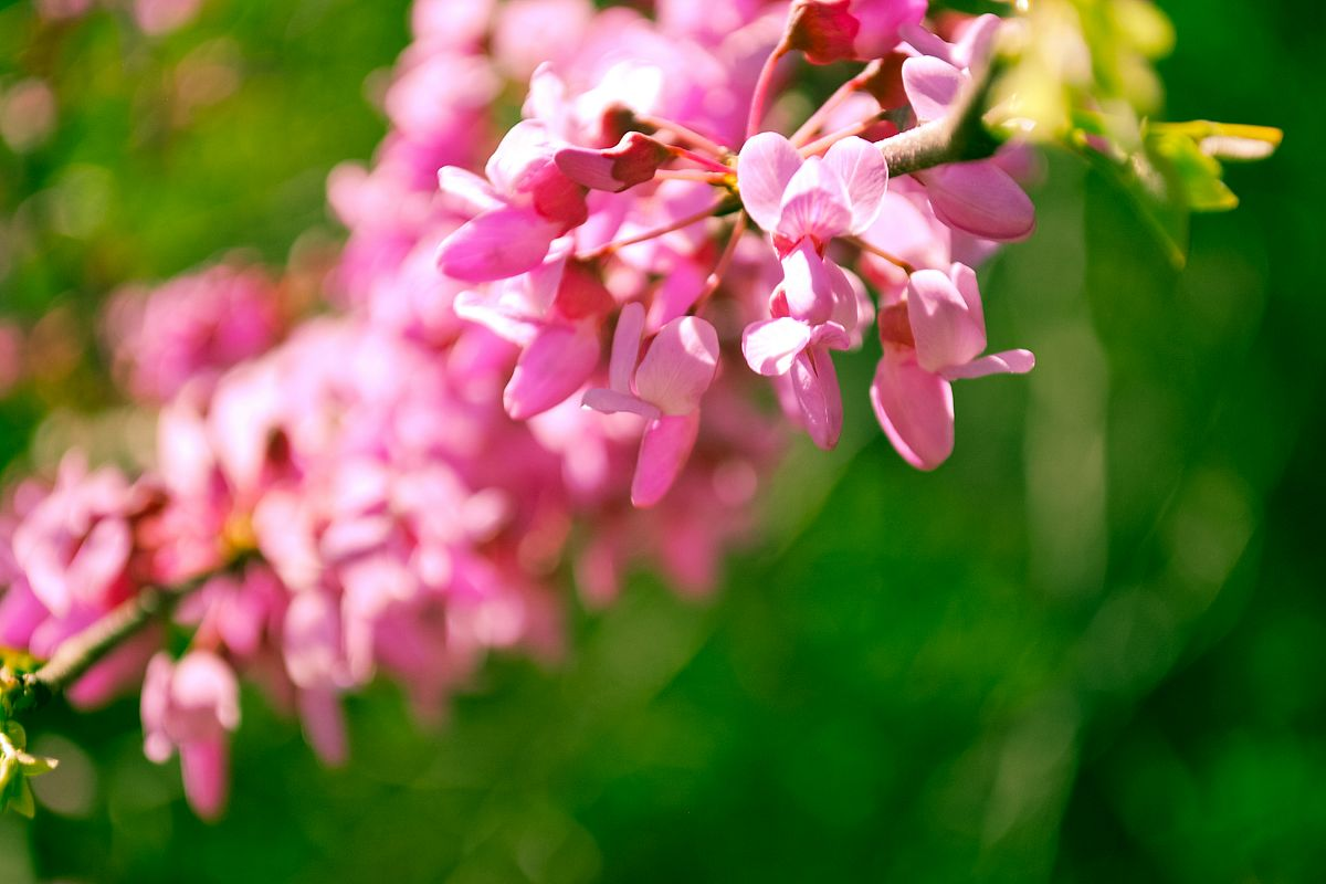 Vibrant Spring Flowers example image 1