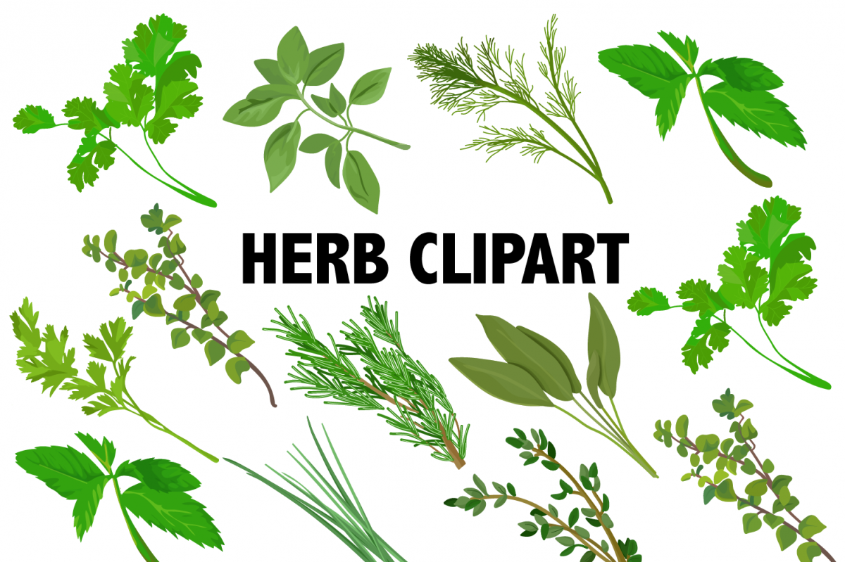 Herbs Clipart example image 1