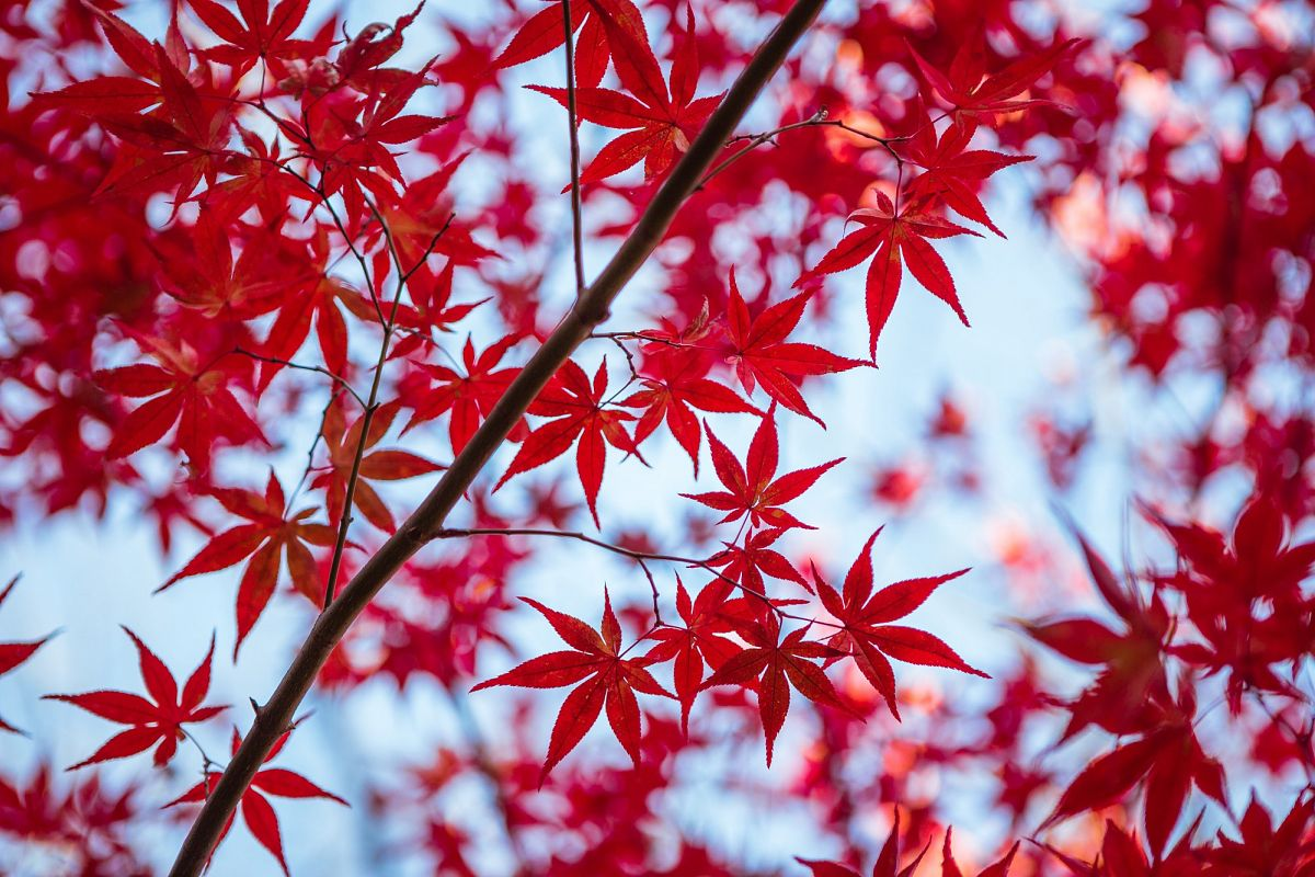 Autumn Leaves #12 example image 1