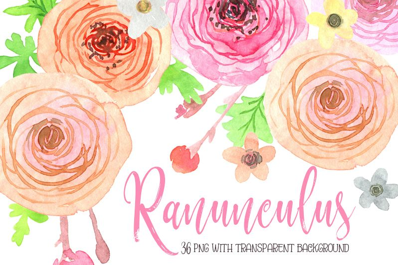 Watercolor ranunculus flowers png example image 1