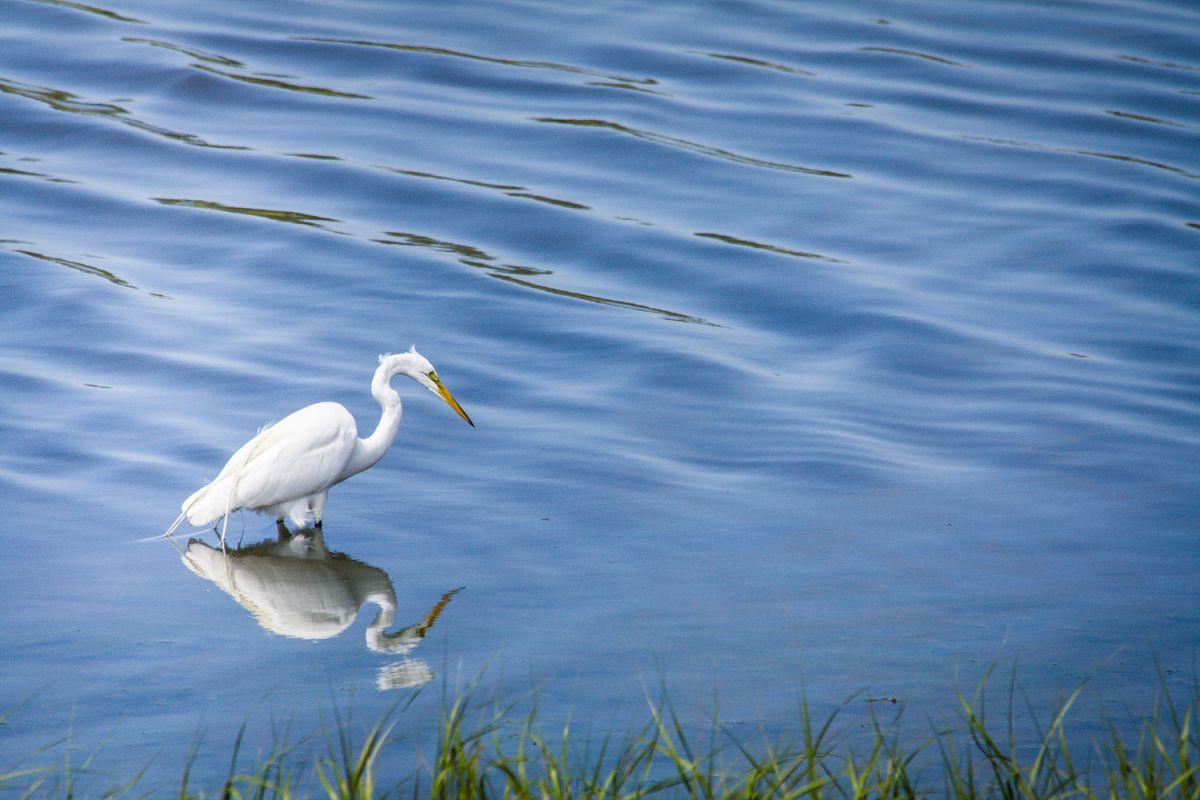 White heron photo 7 example image 1