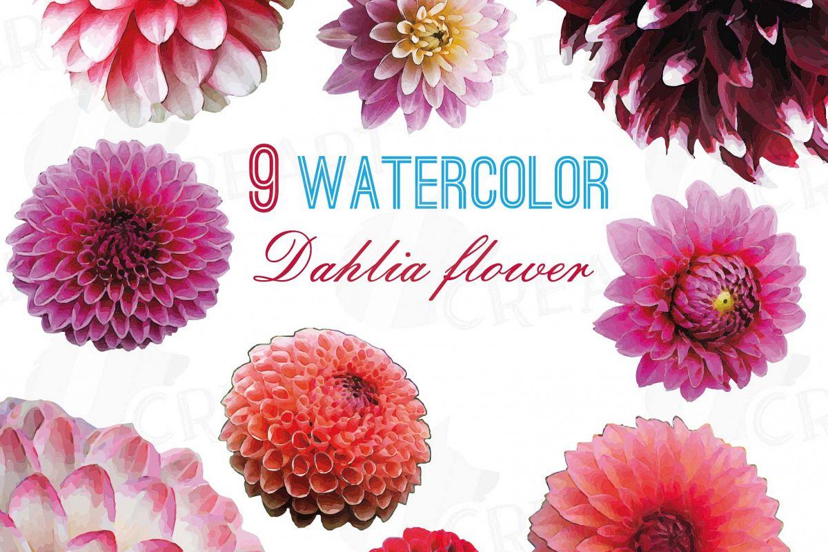 Watercolor Dahlia Flower Clip Art Pack Watercolor Pink Dahlia Red