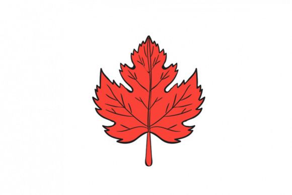 Maple Leaf Drawing example image 1