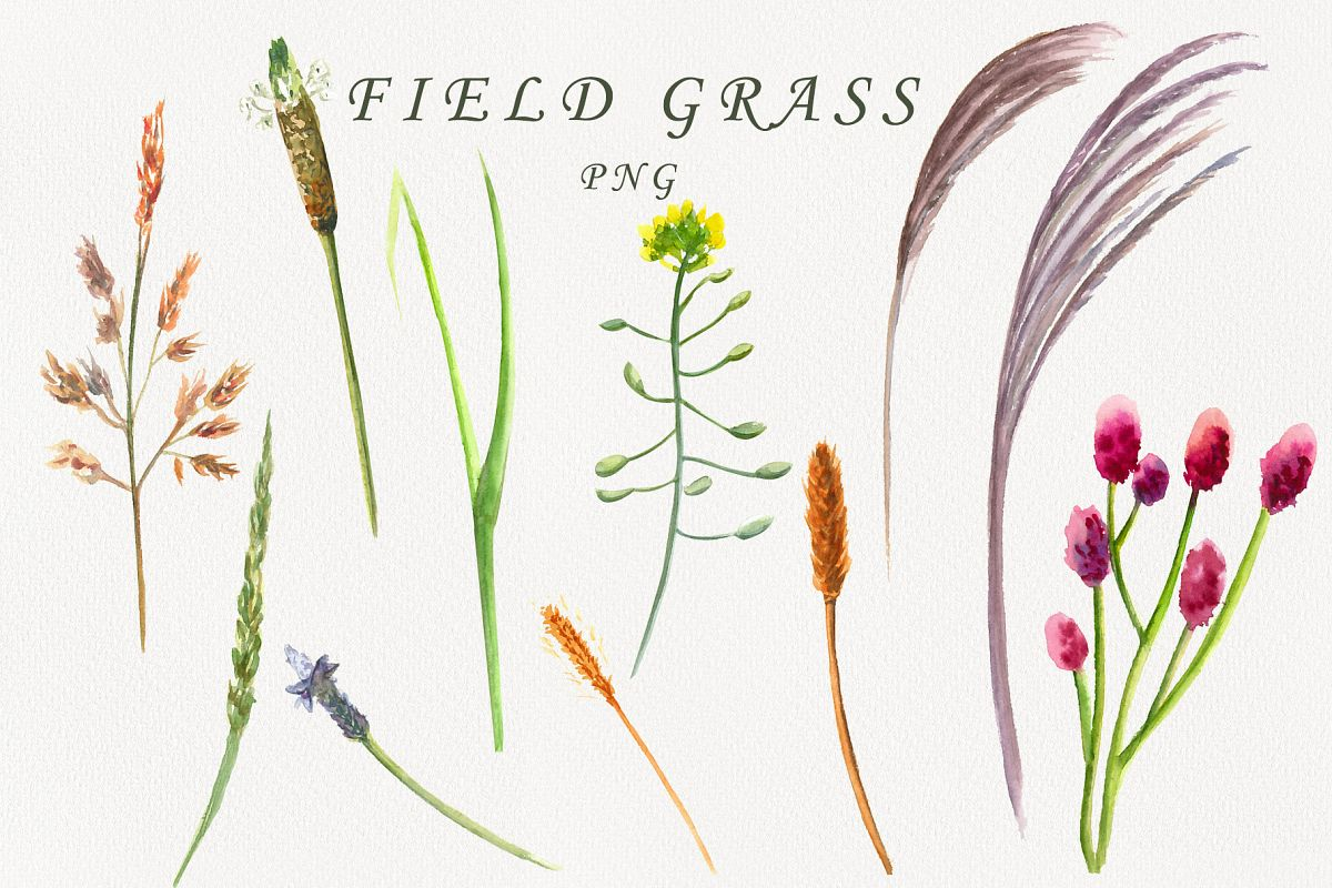 Field grass example image 1