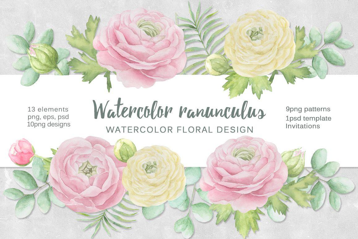 Watercolor ranunculus example image 1