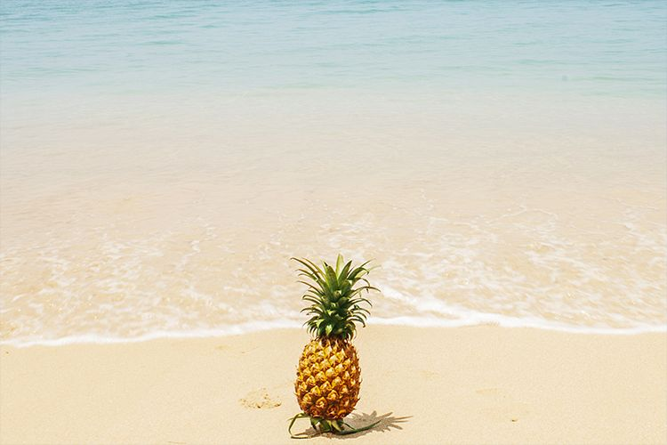 Pineapple of the sea example image 1
