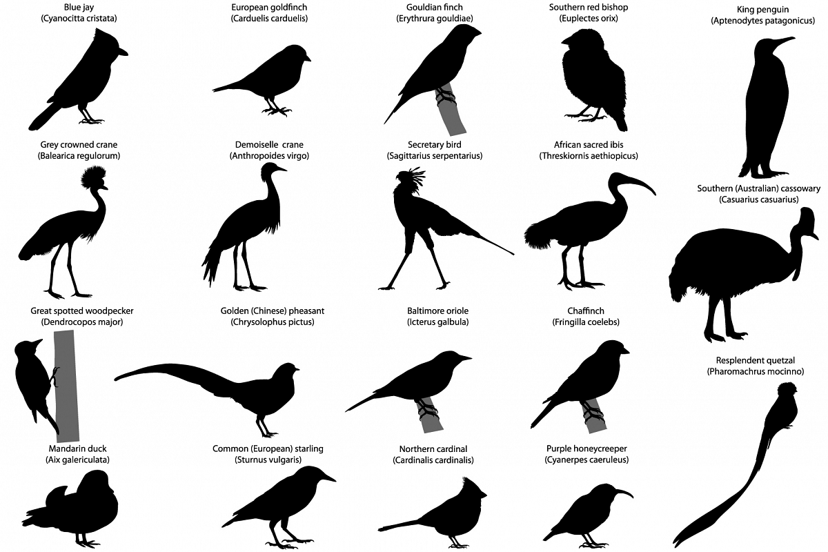 Birds silhouettes example image 1