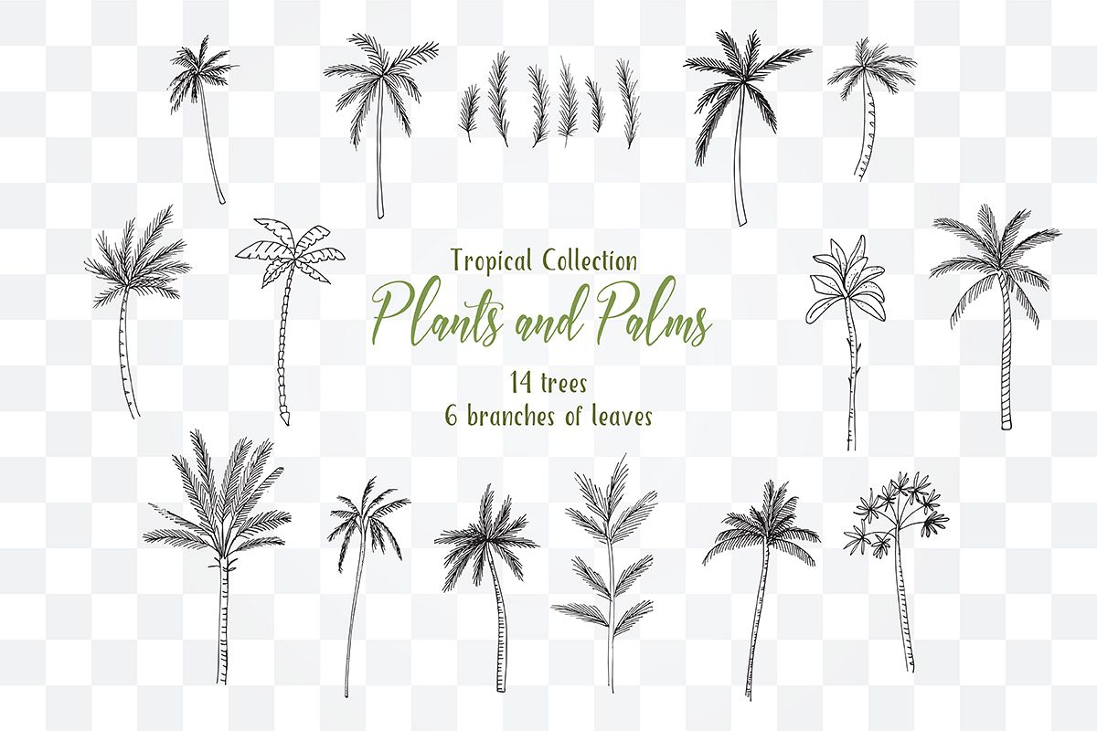 Tropical Exotic collection Tropical collection Summer Plants and PalmsPlants and Palms,tropical invitations, tropical tree example image 1