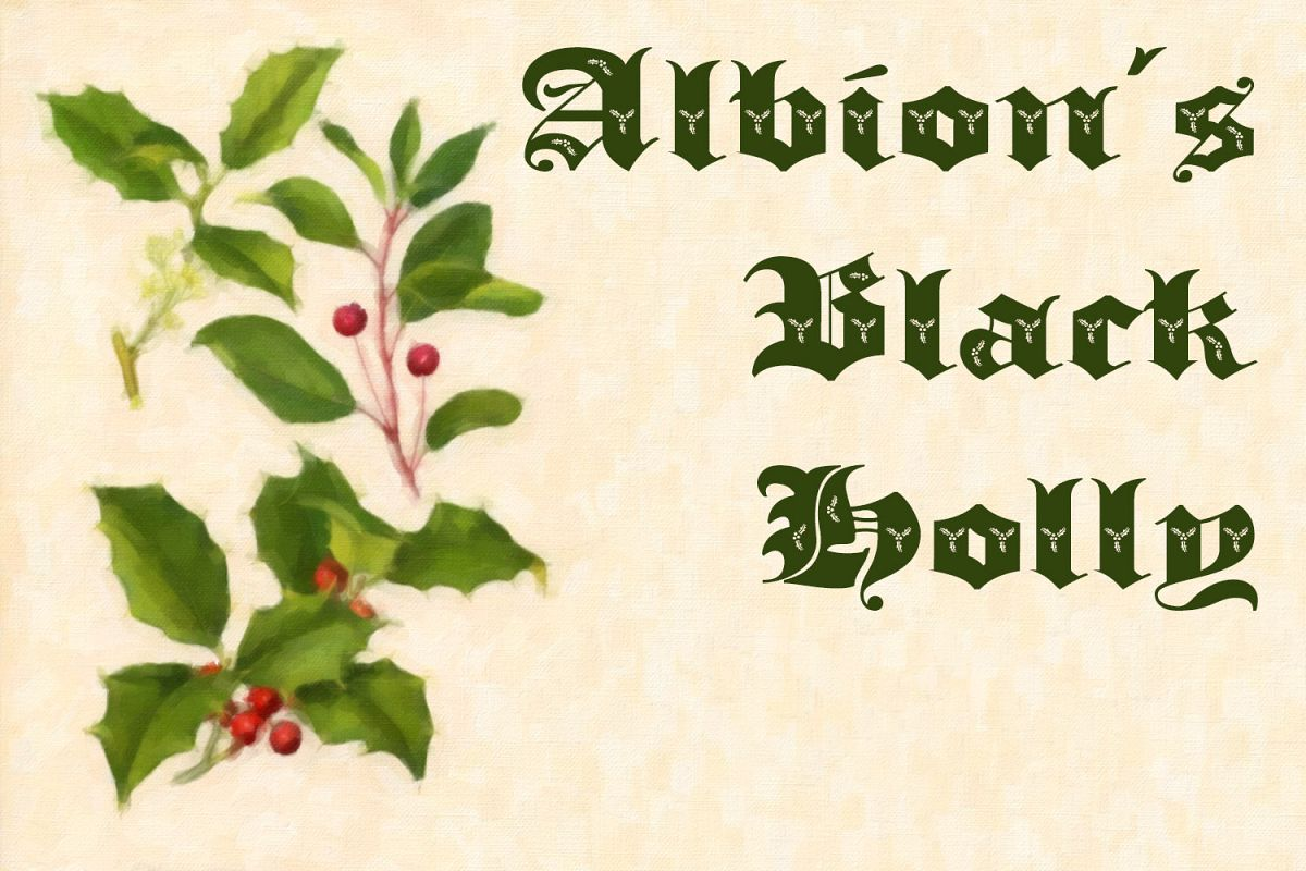 Albion's Black Holly example image 1