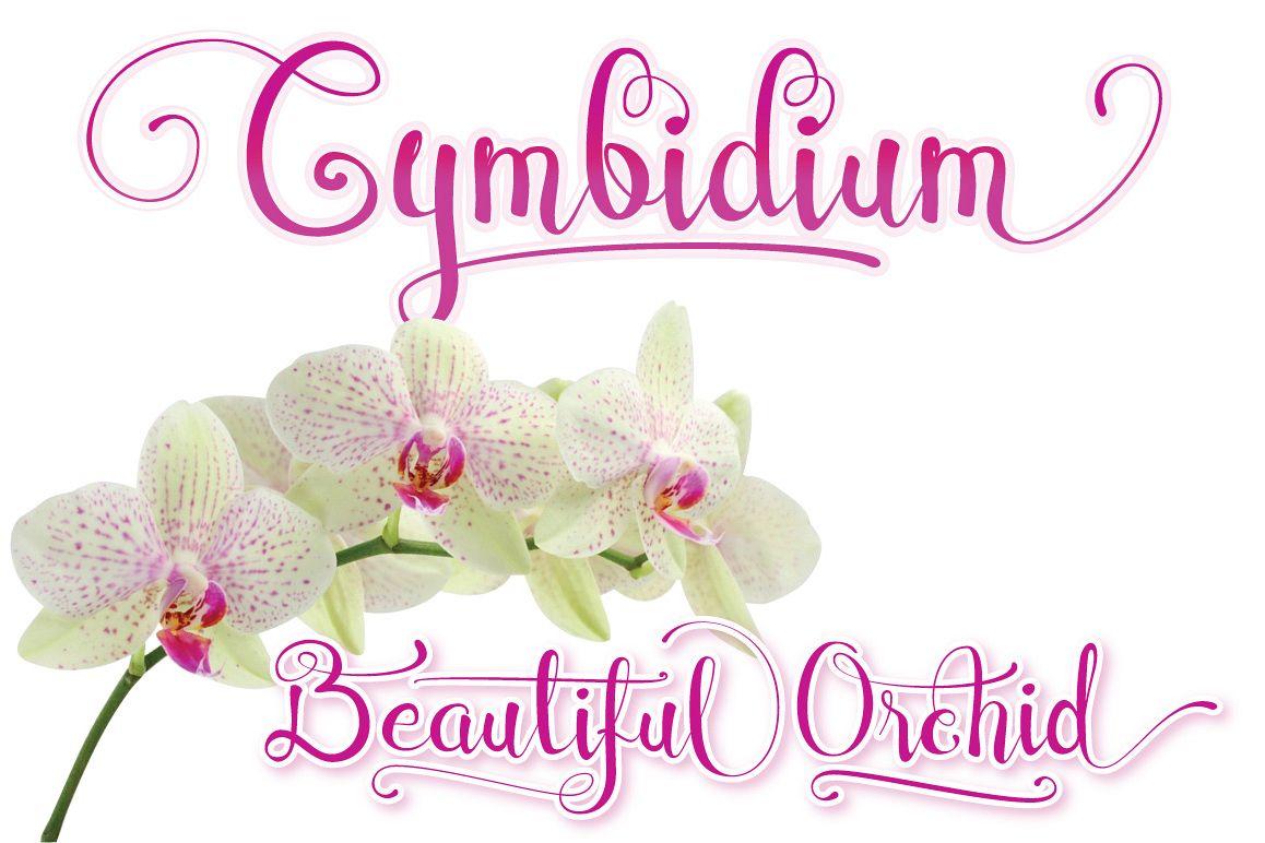 Cymbidium Script example image 1