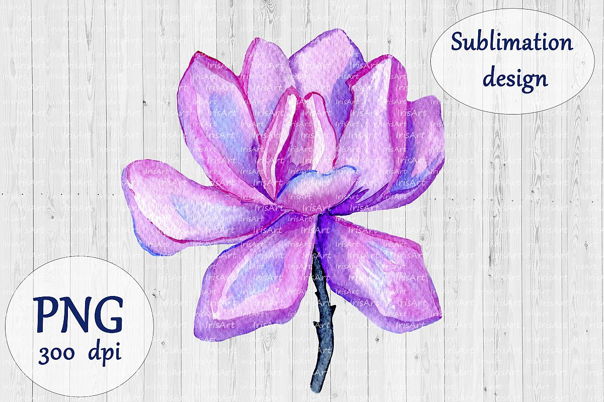 Watercolor Magnolia Flower - PNG Sublimation Design example image 1