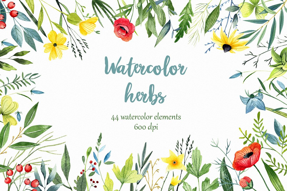 WATERCOLOR herbs, leaves, poppy, wild flowers example image 1