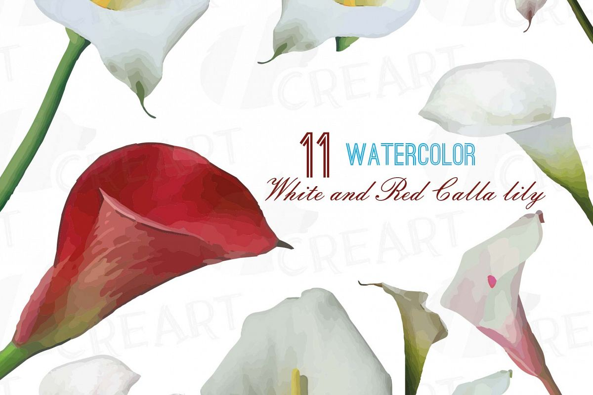 Watercolor White And Red Calla Lily Hand Painted Clip Art Pack