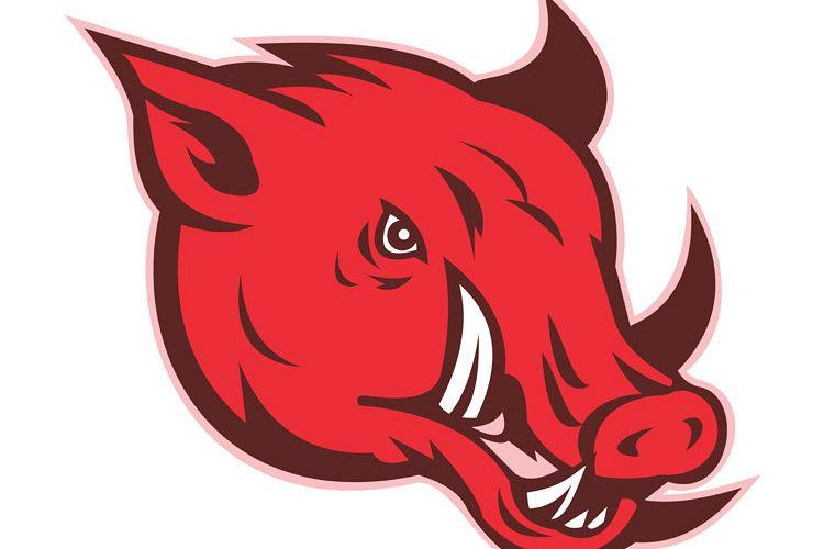angry razorback wild pig hog boar head example image 1
