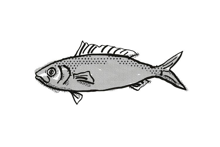 Australian Herring Fish Cartoon Retro Drawing example image 1