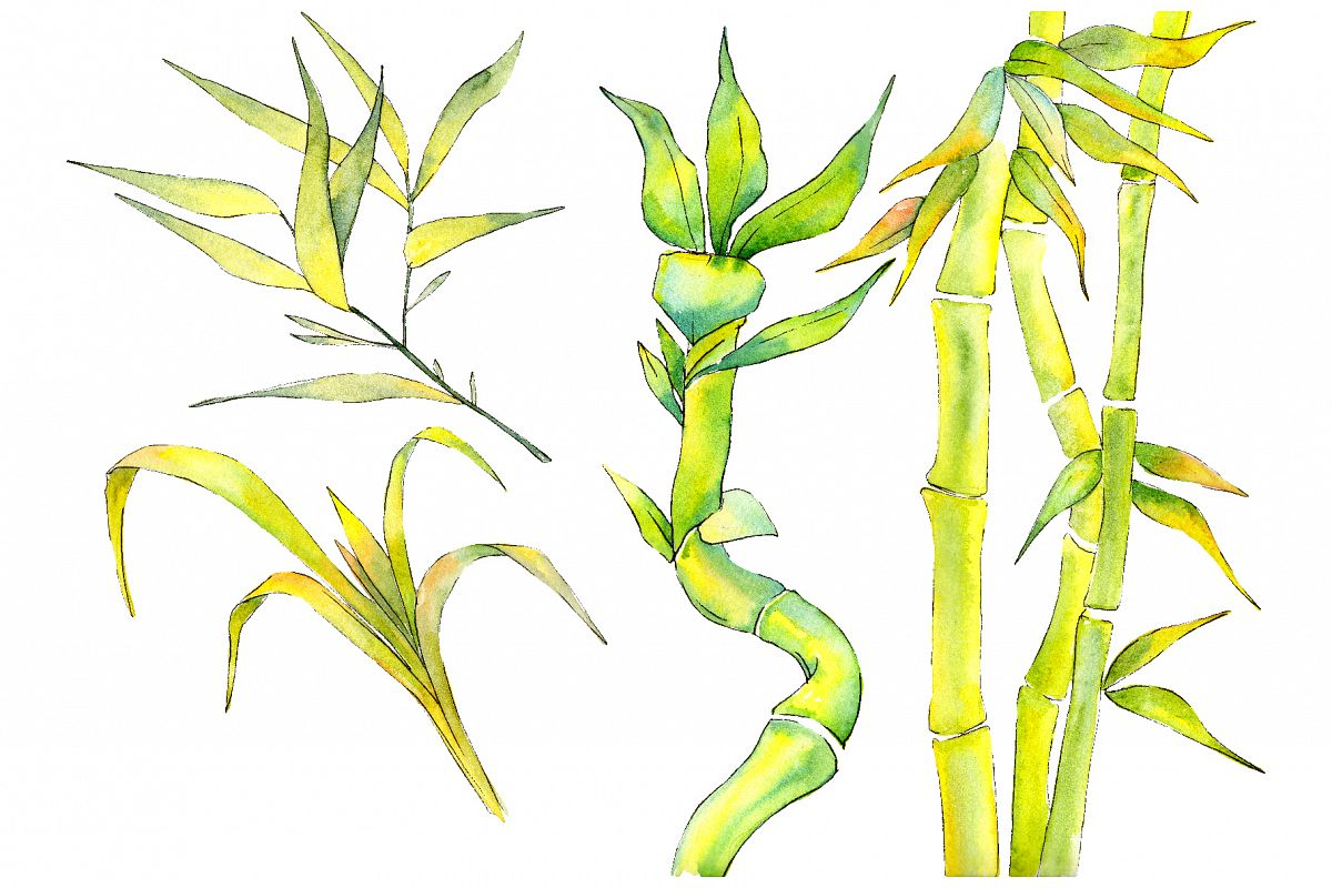 Bamboo watercolor product png example image 1