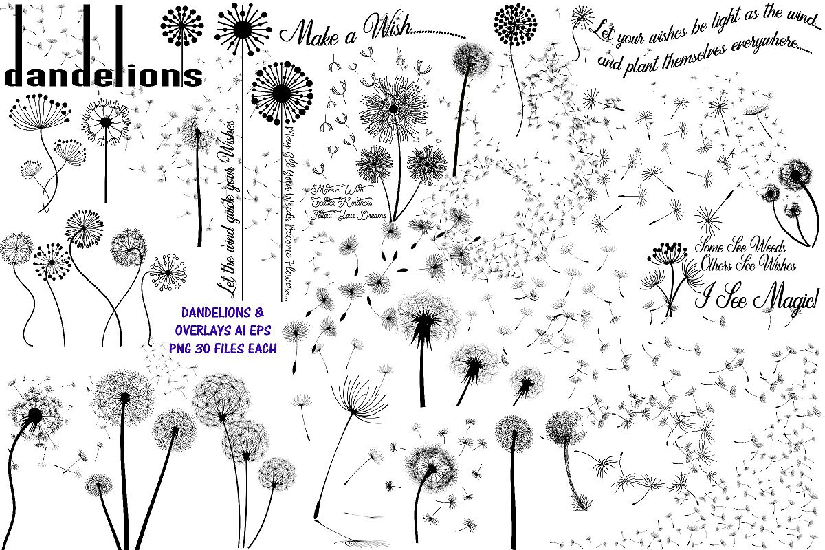 Dandelions and Overlays and Word Art AI EPS PNG example image 1