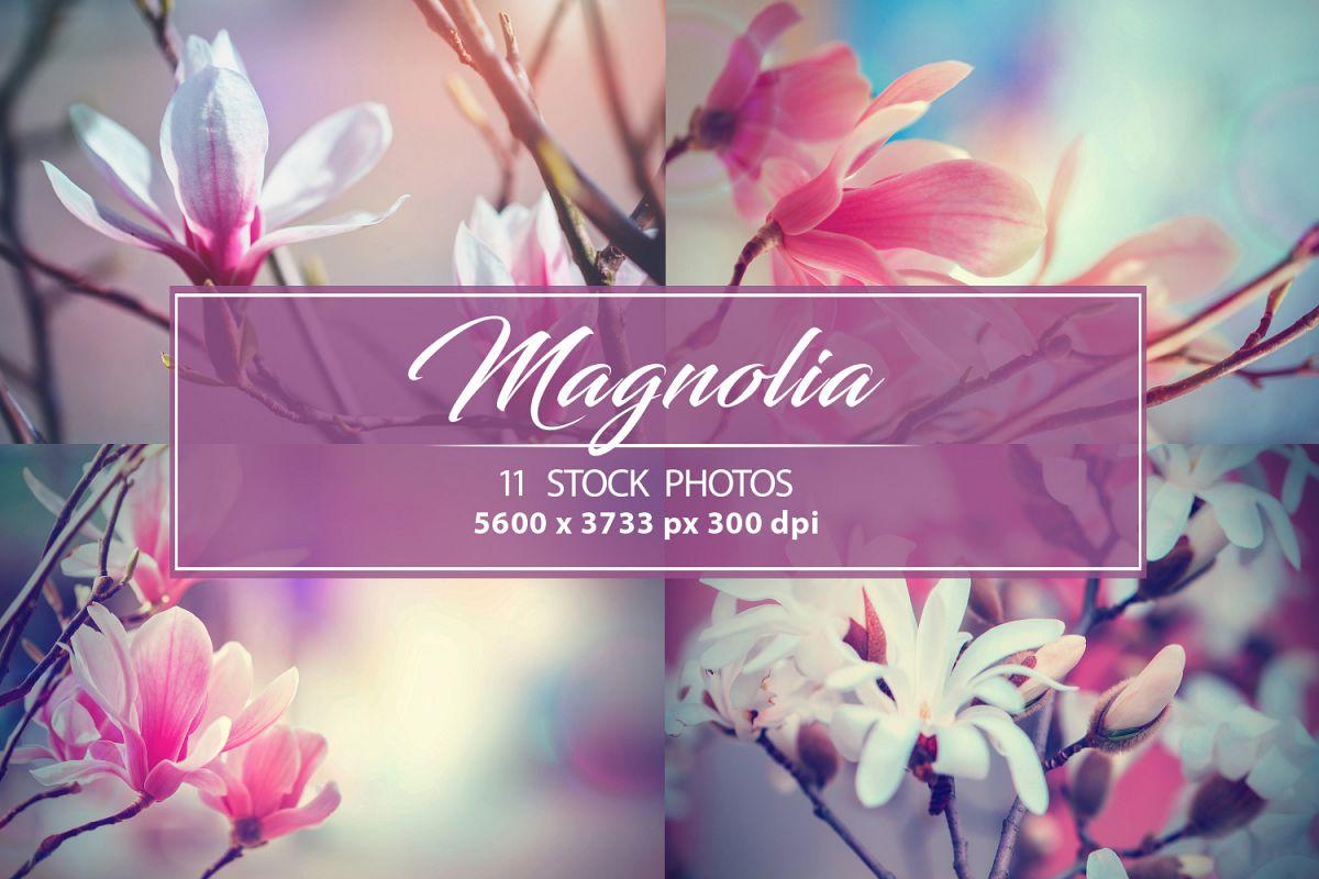 Set photos of spring flowering Magnolia. example image 1