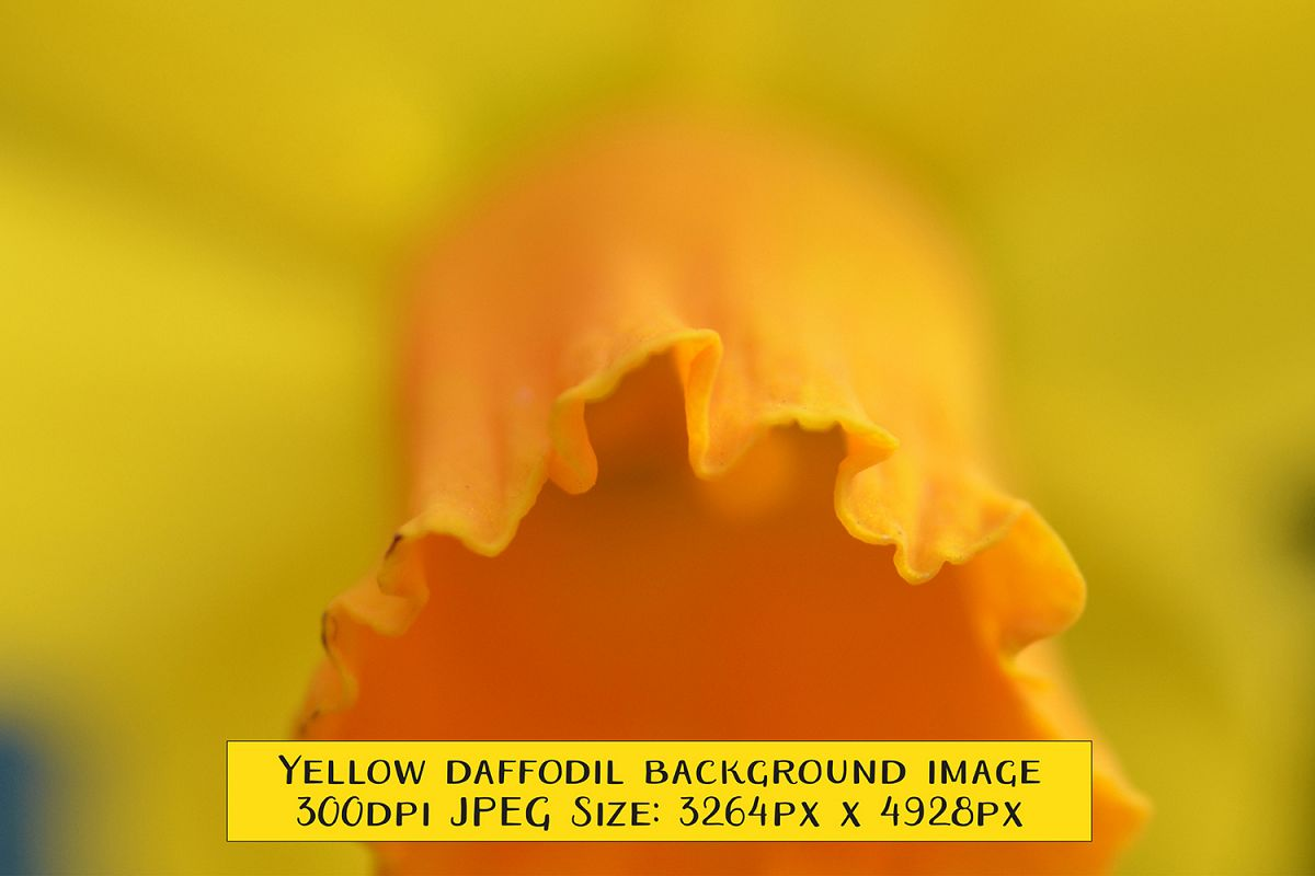 Yellow And Orange Spring Narcissus Daff Design Bundles