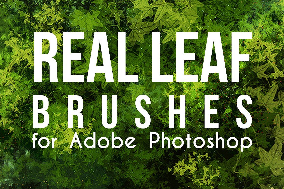 Real Leaves Photoshop Brushes example image 1