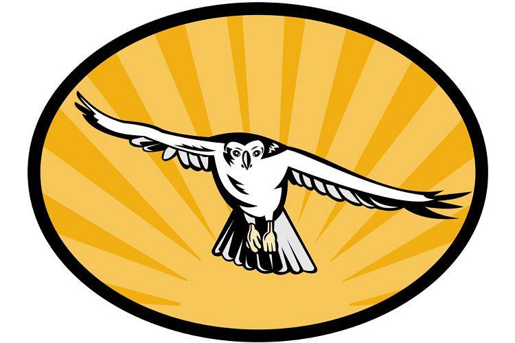goshawk bird swooping down example image 1