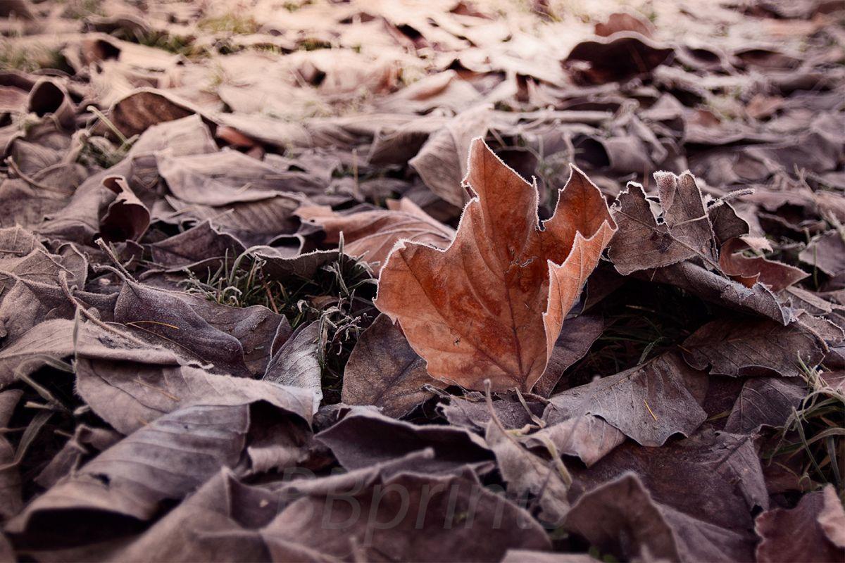 Nature photo, flora photo, leaf photo, winter photo example image 1