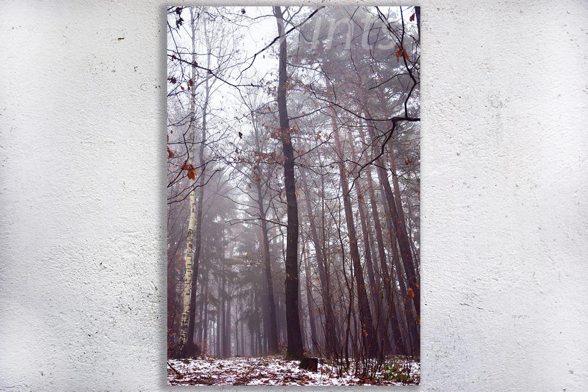 Nature photo, landscape photo, forest photo, winter photo example image 1