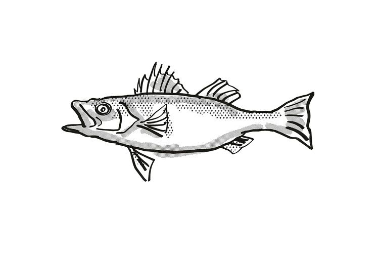 Japanese Seaperch Fish Cartoon Retro Drawing example image 1