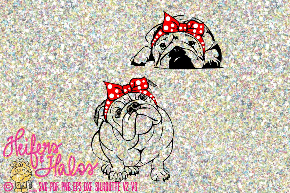 Bulldogs with bandana example image 1
