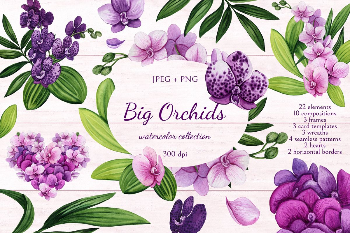Big Orchids example image 1