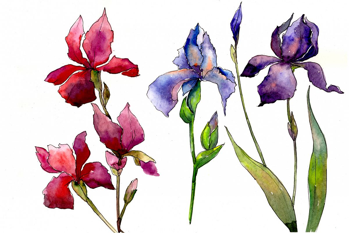 Red and purple irises flowers PNG watercolor set example image 1