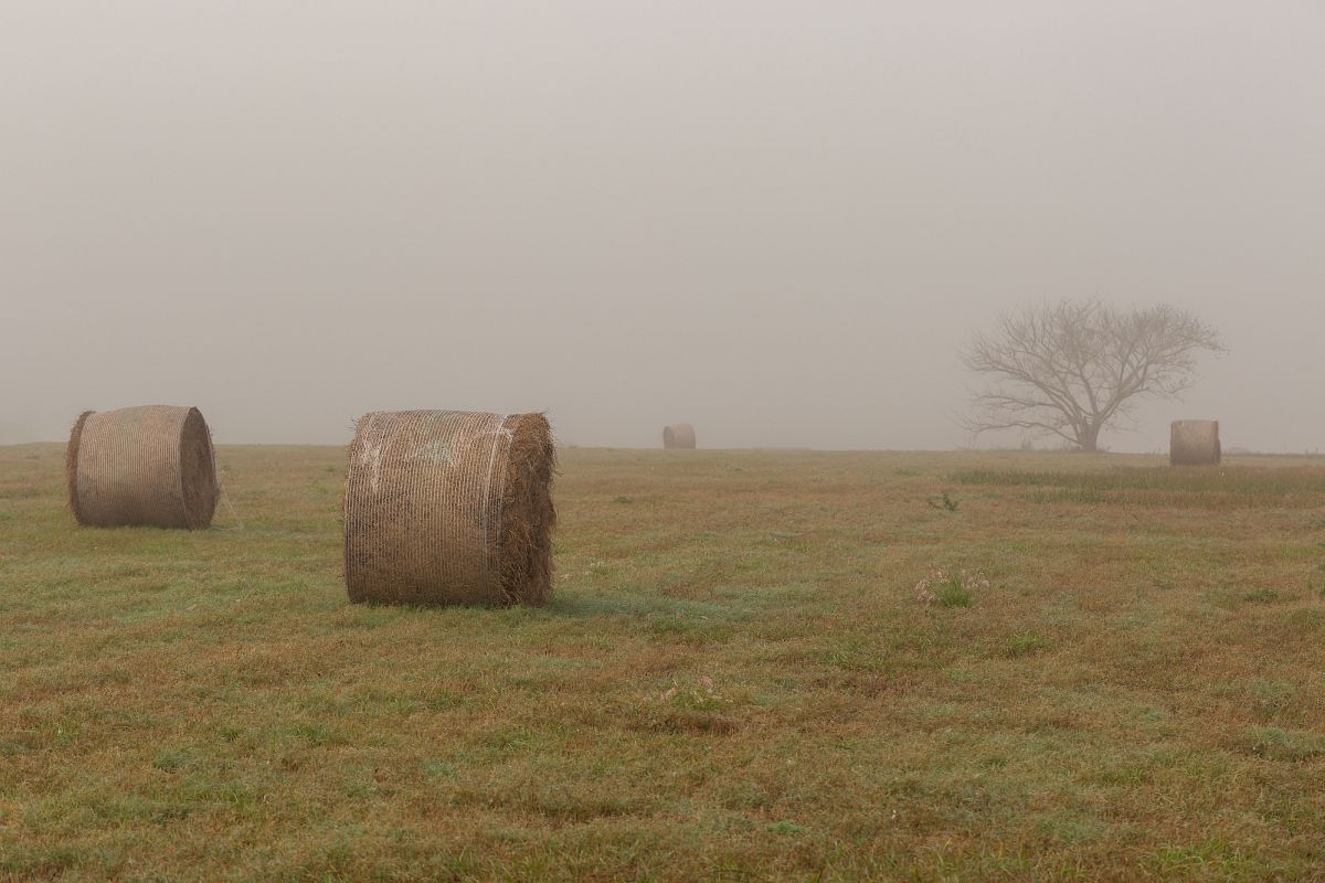 Grass field on a foggy morning example image 1