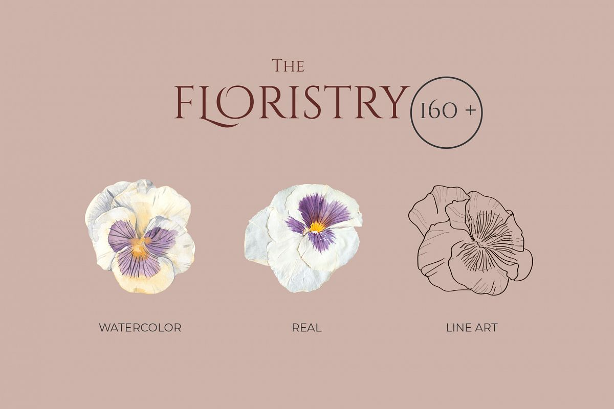 THE FLORISTRY floral collection - watercolor, line art, real example image 1
