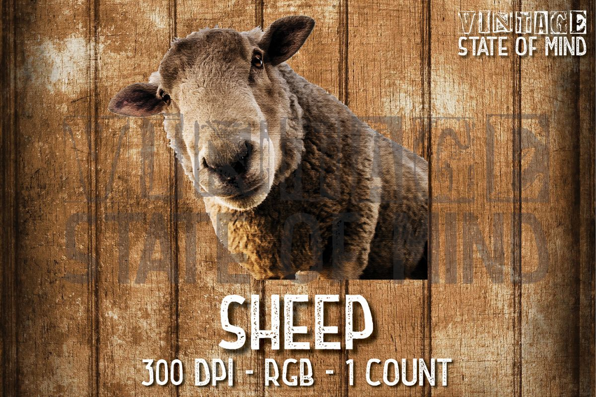 Sheep Sublimation Graphics example image 1