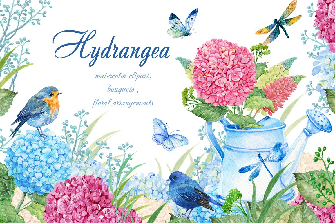 hydrangea watercolor clipart example image 1