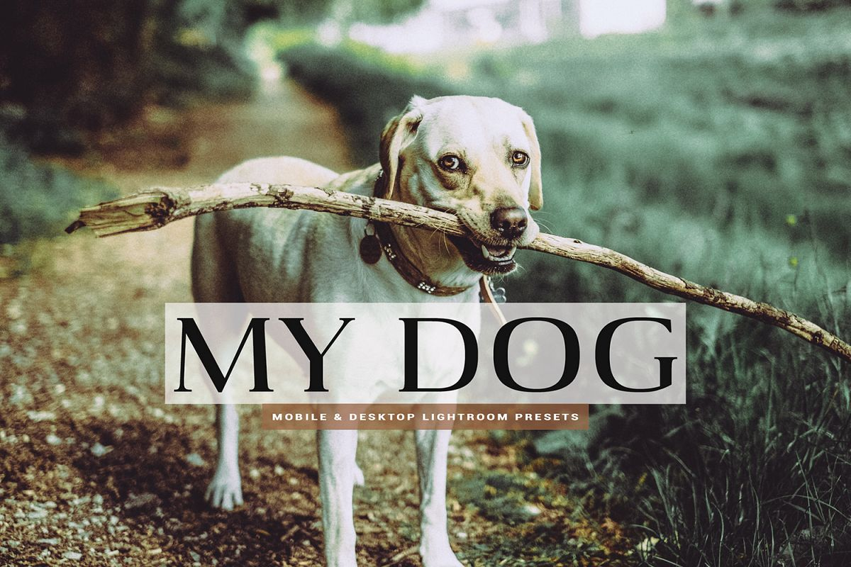 My Dog Mobile and Desktop Lightroom Presets example image 1