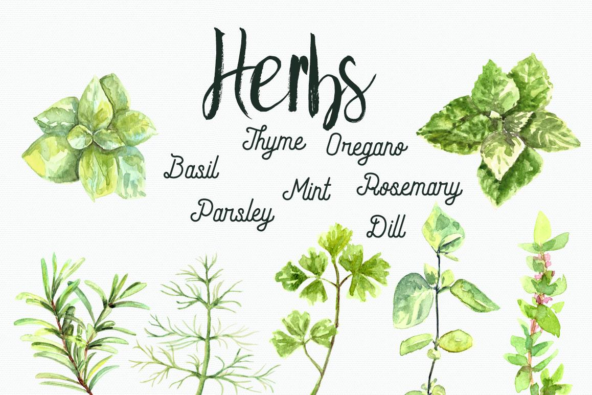 Watercolor Herbs Cli