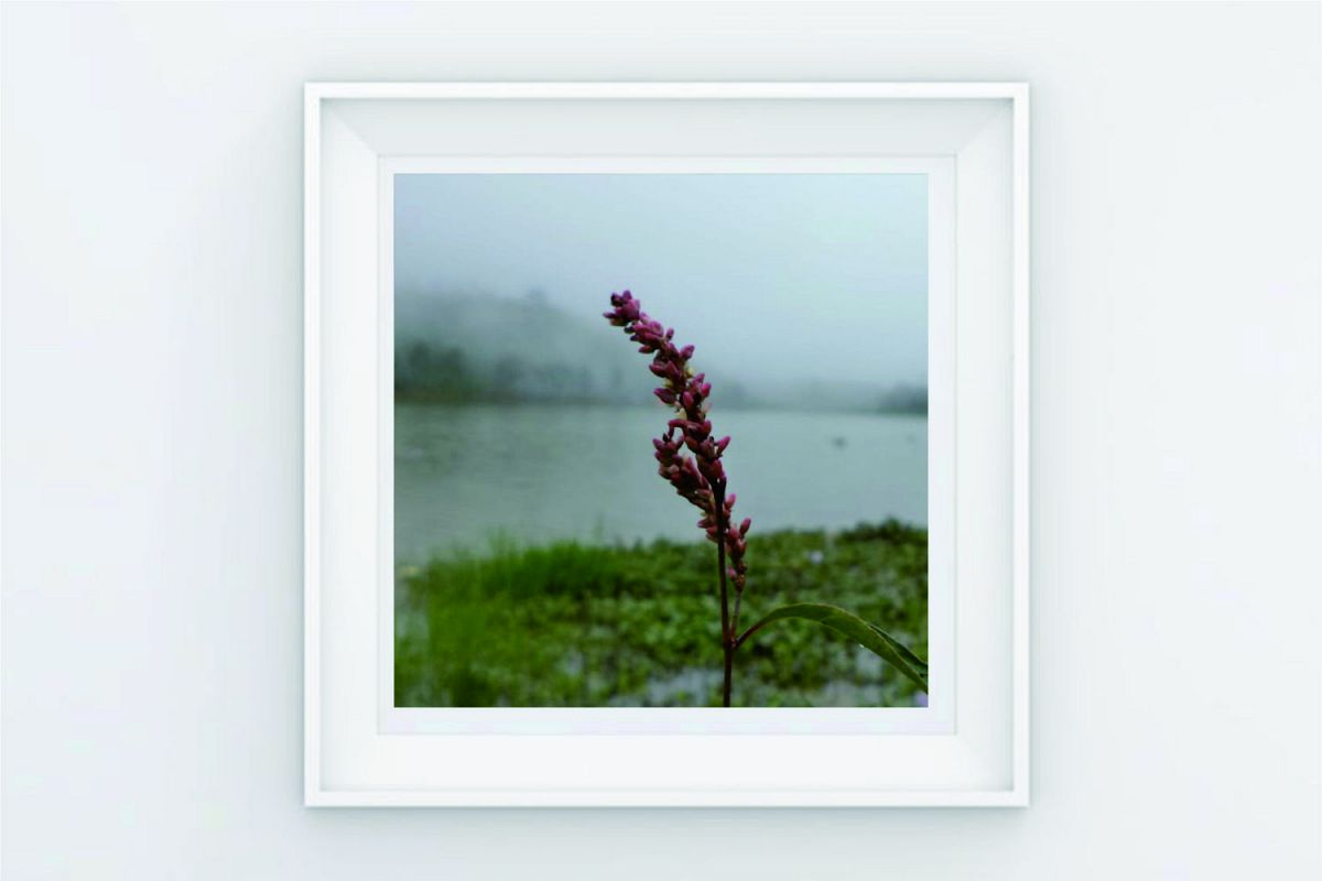 FRAME POSTER TREE PLANT ON THE LAKE example image 1