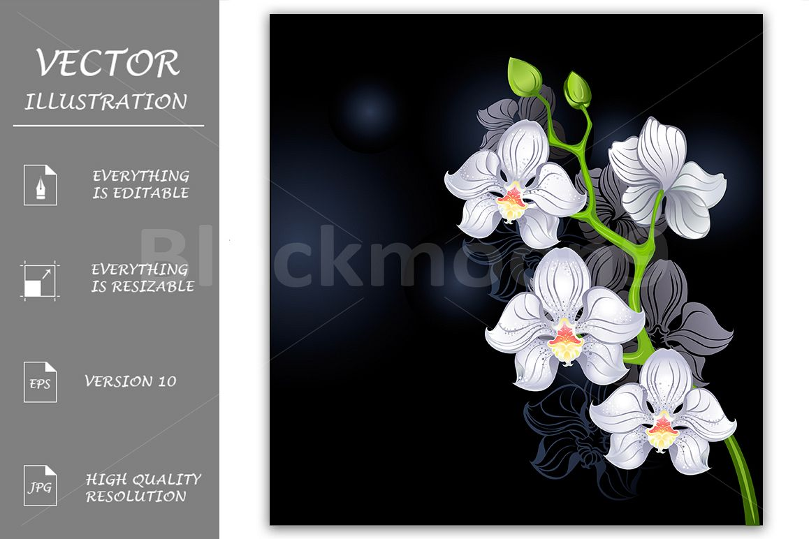 White Orchids example image 1
