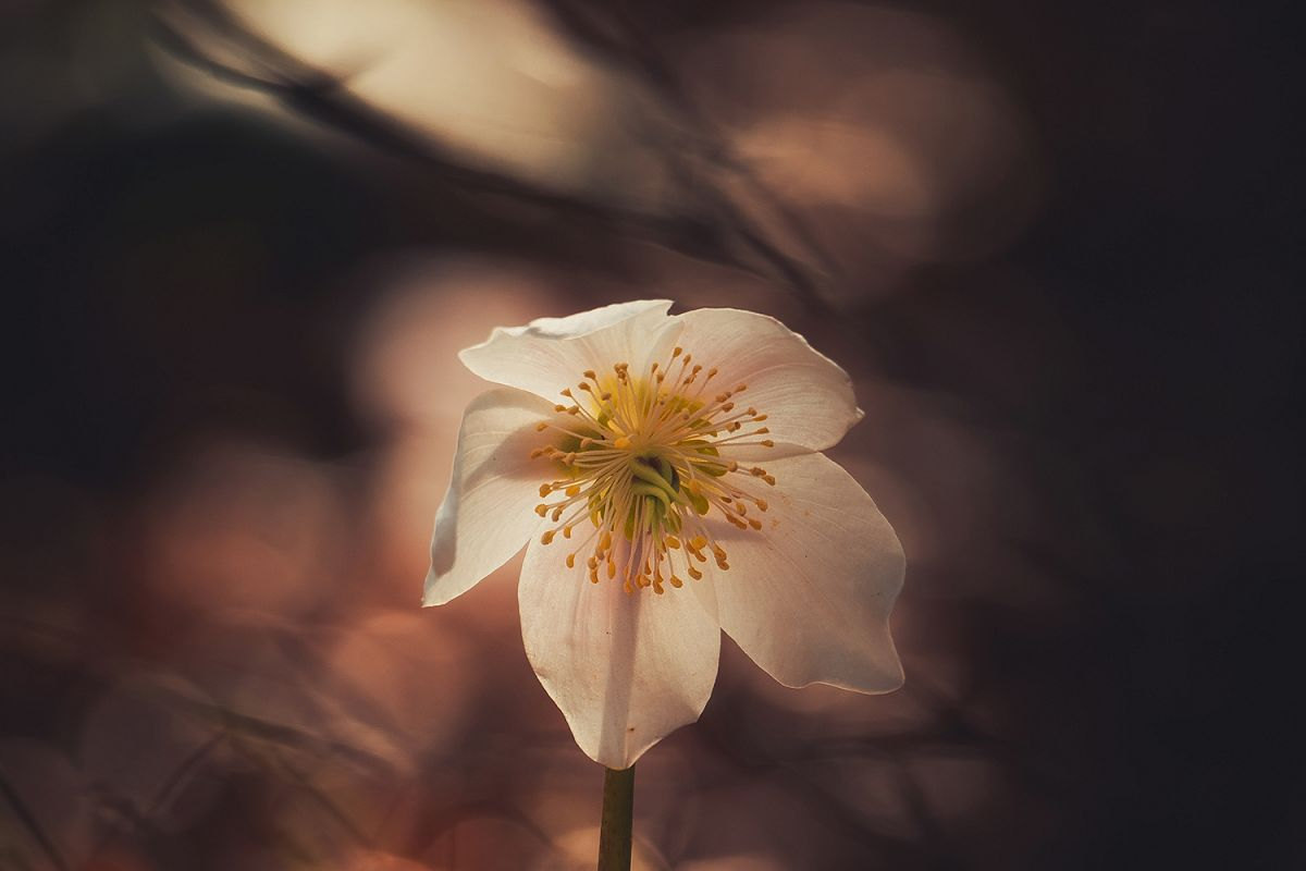 Flower with blurred background example image 1
