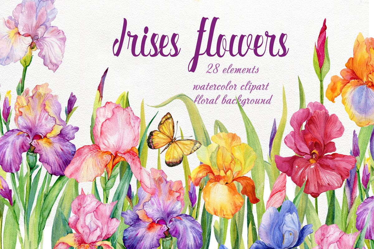 Iris Flowers Watercolor Clipart