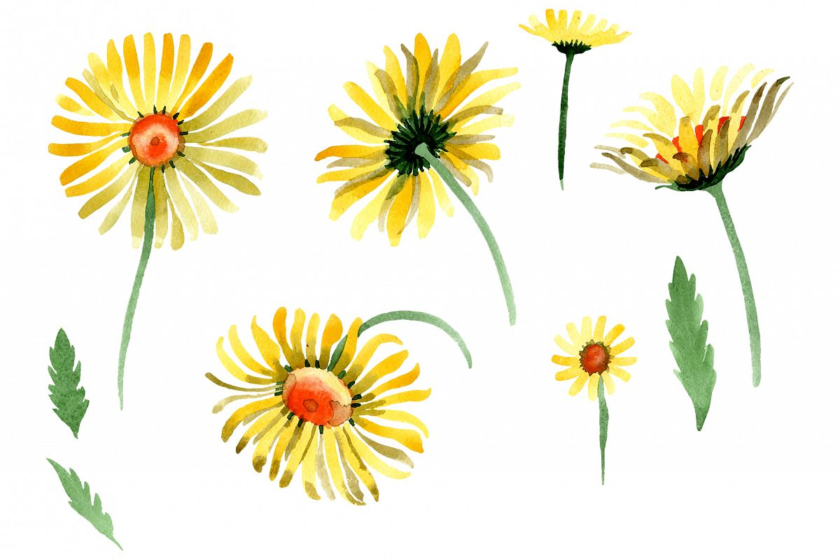 Yellow chamomile Watercolor png example image 1