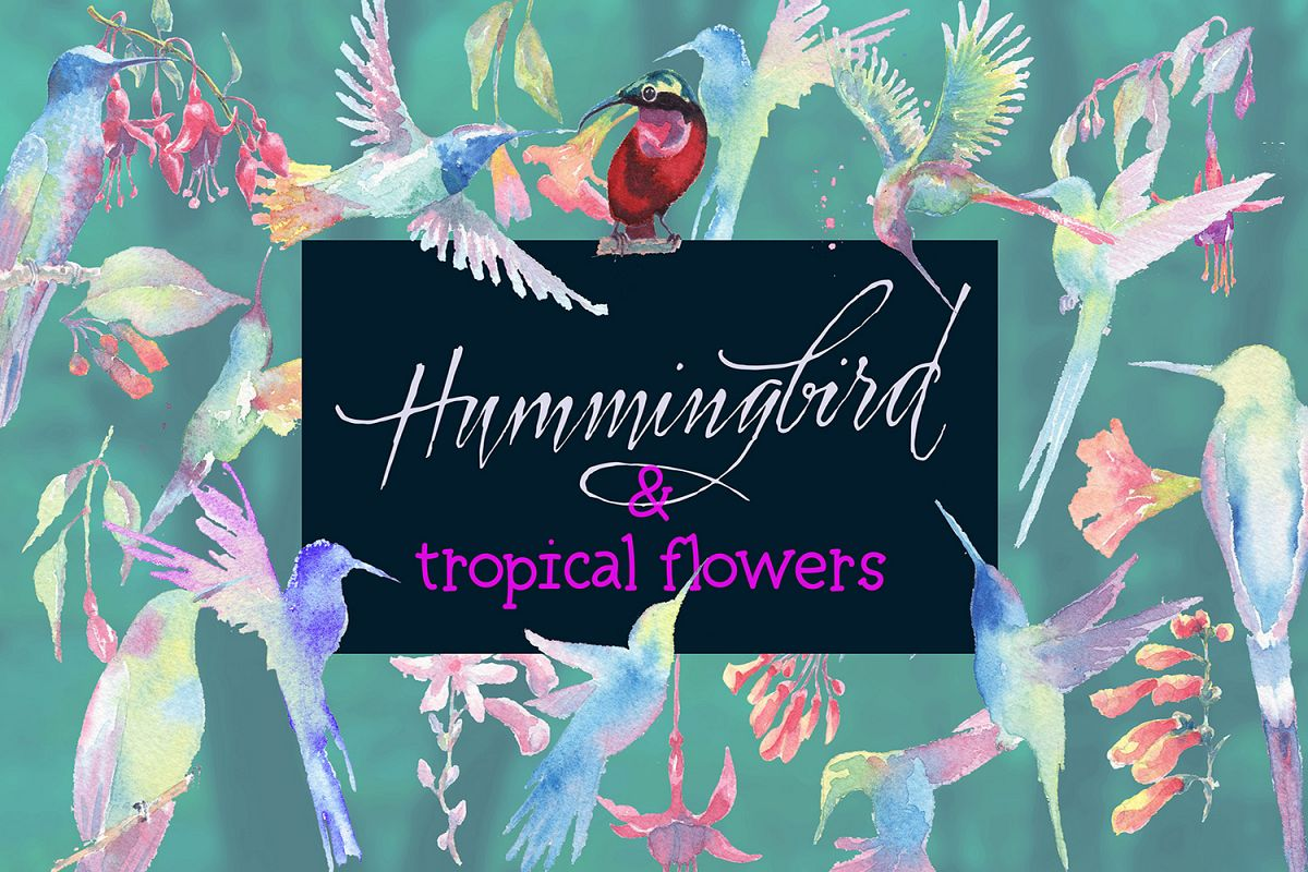 hummingbirds & tropical flowers watercolor clipart example image 1