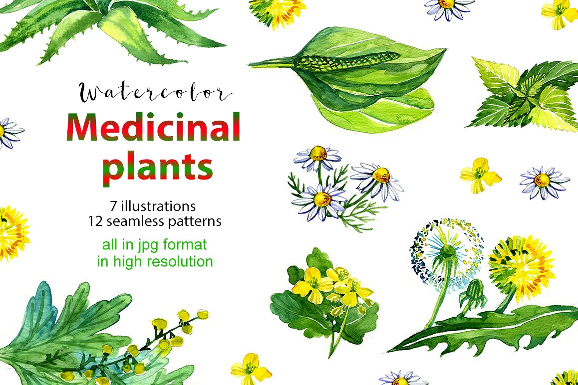 Watercolor medicinal plants set example image 1