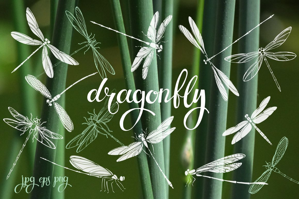 Dragonflies. example image 1