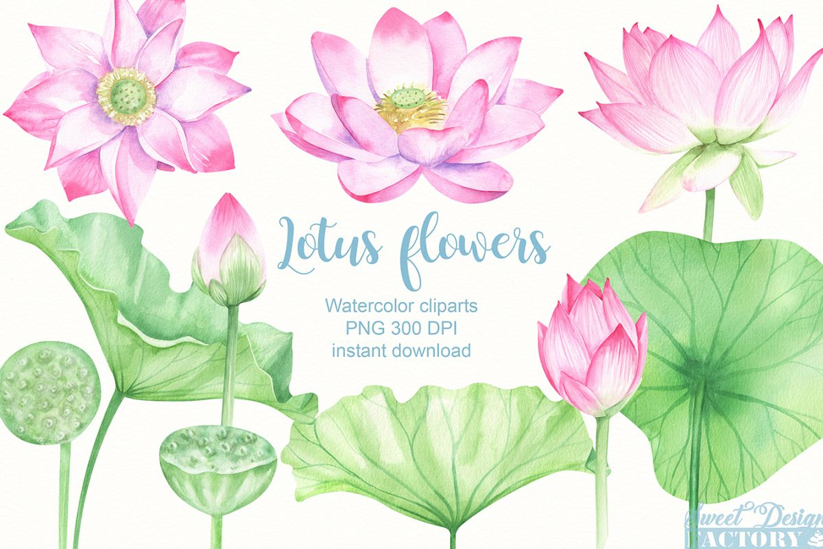 Watercolor Lotus Flowers And Leaves Cliparts