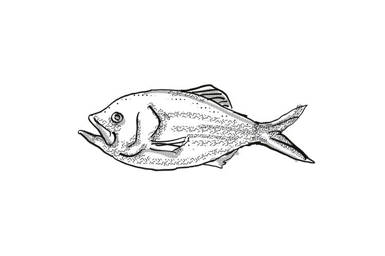 Golden Snapper New Zealand Fish Cartoon Retro Drawing example image 1