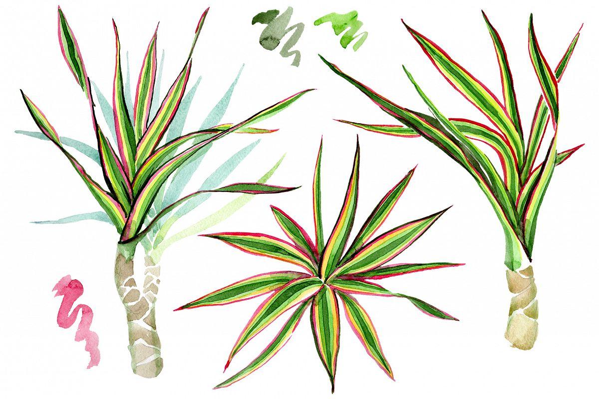 Dracaena Maraginata Tricolor Watercolor Png